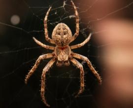 Čištění fasád od pavučin a postřiky proti pavoukům