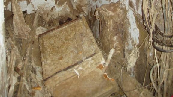 Co dokáže dřevomorka domácí